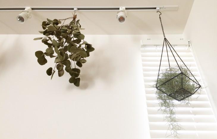 賃貸アパートでもできる!植物を吊るしてインテリアにグリーンをプラス